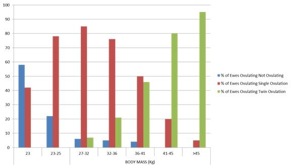 ewe_feeding_graph.jpg